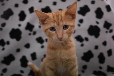 El objetivo es mejorar la convivencia de estos animales con los vecinos y alejarles del centro escolar. El CPA recuerda la prohibición de alimentar a los gatos sin autorización.