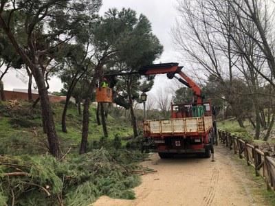 Un operativo de 43 trabajadores ya trabaja en la retirada de ramas y árboles caídos, apoyados con maquinaria, que reforzarán los trabajos de los operarios de la Concejalía de Mantenimiento de la Ciudad y Medio Ambiente.
