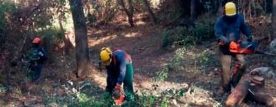 Tareas de limpieza, desbroce y mantenimiento en arroyos y el parque natural