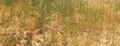 Nota del Ayuntamiento sobre los trabajos de desbroce de herbáceas en el municipio