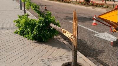 Las inclemencias meteorológicas provocan fracturas de árboles y pequeños desperfectos en Arroyomolinos