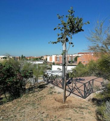 Se realiza la plantación de 16 árboles en el entorno de Avda. del Cantábrico
