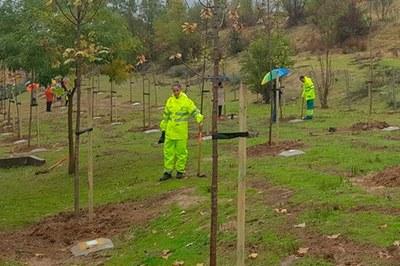 Cada pequeño nacido y empadronado en Arroyomolinos en 2016 tendrá su árbol con una placa con su nombre. Este año la plantación de más de 400 árboles se va a realizar en la Avenida Islandia.