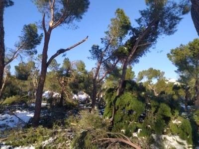 Guía rápida de información sobre el acceso a ayudas y subvenciones para la reparación de daños y desperfectos ocasionados por la tormenta Filomena